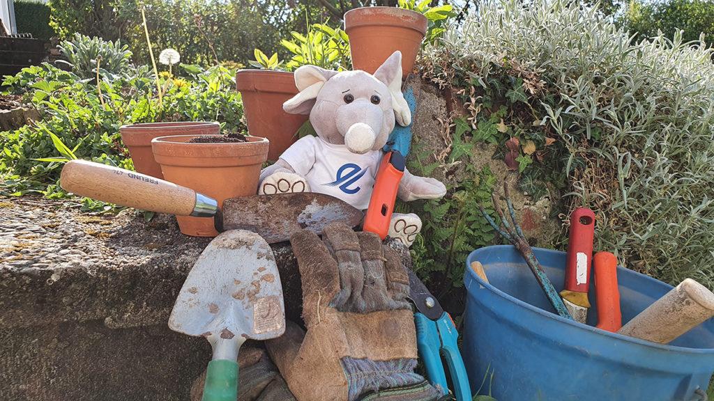 Der TSC Eintracht möchte seine neuen Gewächshäuser mit gebrauchten Gartengeräten ausstatten und sucht nach Spenden.