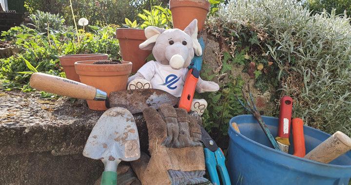 TSC Eintracht sucht Gartengeräte und Hobbygärtner für Ernährungsprojekt